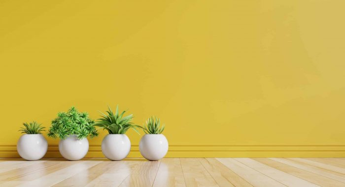 Yellow empty room with plants on a floor,3D rendering